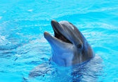 звук дельфина из спанч боба