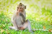 Звуки обезьяны