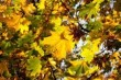 Звук шелеста листьев