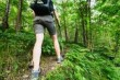 Звук шагов в лесу